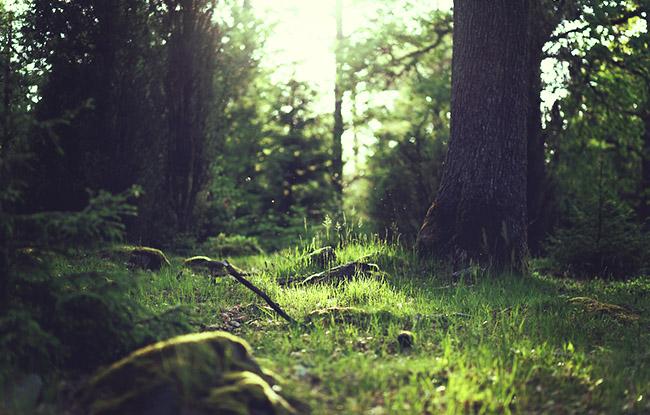 Erdőművelő