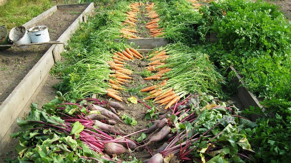 Kiskerti növénytermesztő Tanfolyam OKJ Képzések OKJ Tanfolyamok