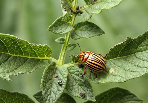 Növényvédelmi szaktechnikus Tanfolyam - OKJ Képzés