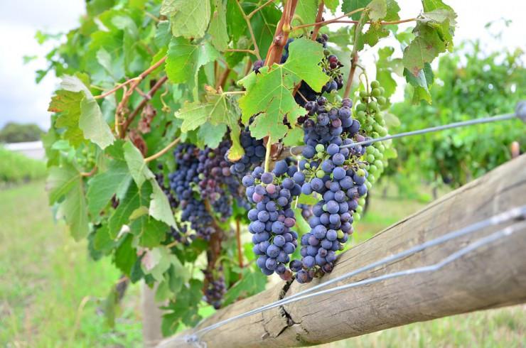 Szőlész-borász Tanfolyam_OKJ Képzések_OKJ Tanfolyamok